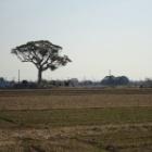 『【三重県のパワースポット。なごの大楠】をDJIドローン-ファントム4で空撮。』の画像