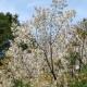 3月27日 大貫谷公園でプレイパーク!