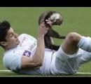 ほのぼのニュースの定番 動物が試合中に乱入  →選手が蹴って死なせる