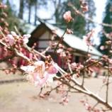 『梅の花』の画像