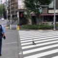 国際ニュース - 口からシュッ。日本野鳥の会のディスペンサーがさすがだった。「完成度高い」「かわいすぎ」の声