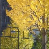 『萌ゆる黄色』の画像