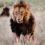 『実在の動物を召喚獣として呼び出せるなら「最強はライオン」だけどさぁ』の画像