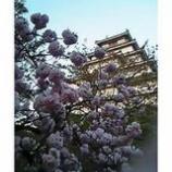 『会津鶴ケ城1』の画像