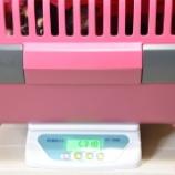 『てぃいだの体重測定~☆』の画像