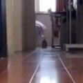 【子ネコ】 部屋の向こうから何かがやってくる。ぴょんこ、ぴょんこ♪ → 弾む毛玉の破壊力…