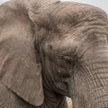 『ゾウの皮膚の皺』の画像