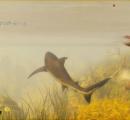 人喰いサメになって人を襲いまくるオープンワールドゲーム『Maneater』が話題に!