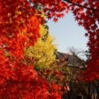 『信州紅葉写真散歩【軽井沢・上田城・小諸城】 | Autumn Foliage Photos in Nagano Nov. 11 & 12, 2017』の画像