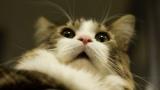 ドッグランに猫入れたらどうなるの?