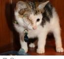 拾ったら耳が4つあった子猫「リトル・フランキー」(フランケンシュタインから命名)が超ワイルドな件