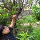 『後片付けと庭周り』の画像
