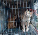 猫を虎の子と偽り客に出していたベトナムの料理屋店主「今日はもう31匹やった」