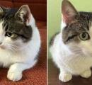 この猫を3570万円で!モスクワでギネス級売り出し価格がついたワケ