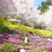 花とりどり山里へ