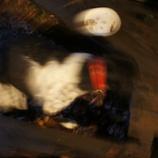 『チン太の逃げ場』の画像