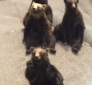 「お前、なんなんだ!」熊「お前こそなんだ」暗闇でクマと気付かず格闘 秋田