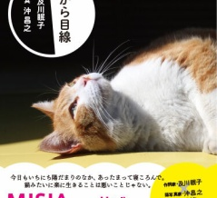 もうすぐ発売。 猫から目線。