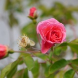 『庭の花たち & 庭の手入れ』の画像