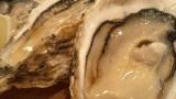 牡蠣「皆人間に食われちまった…畜生…ちくしょう…絶対に…絶対に!」