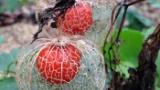 魔界に咲いてそうな不思議な植物見つけたんだがなにこれ?(※画像あり)