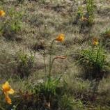『朝の高原』の画像