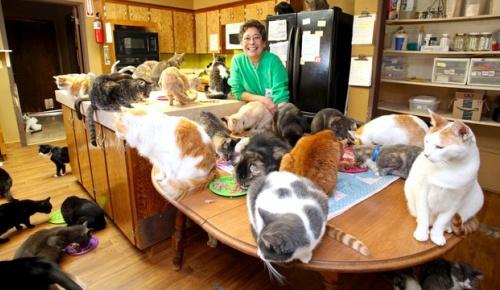 1100匹の猫のために自宅をシェアして生活する米女性、累計2万8千匹を保護していた【海外の反応】