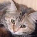 【ネコ】 寝ている犬に猫が乗っかっていた。飼い主が聞いてみる。お腹減った? → こうなる…