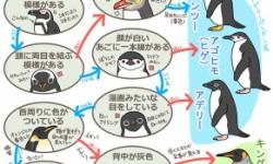 自宅でペンギンって飼っても大丈夫?