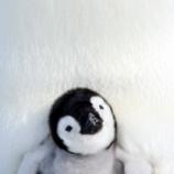 『雪の中の動物たち』の画像