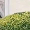 【ネコ】 垣根の中に何かいる。そこにいるのは誰? → やばい、のぞきがバレた…