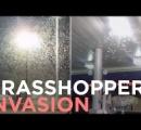 ラスベガスにバッタが大量発生:おびただしい数に唖然とする【動画】