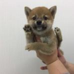 ペットショップワンラブ イオン石狩緑苑台店のスタッフブログ~在籍の子犬子猫やトリミングの情報を公開!新入荷商品の情報も要チェックですよ(^^♪