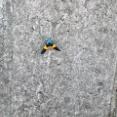 【画像】ある一定の周期で大量発生する蛾が気持ち悪すぎるwwwwwwww