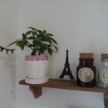 『【DIY】100均セリアの人気商品「木製ウォールラック」で壁をおしゃれに飾るインテリア術 2/3 【インテリアまとめ・インテリアブログ 人気 】』の画像