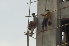 【画像】インドのとび職がすごい