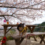 『🌸桜のラッキーガーデンへ 📝』の画像