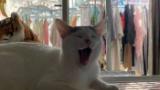 【朗報】ウチのネッコ、朝を迎える(※画像あり)
