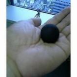 『掌中の玉(しょうちゅうのぎょく』の画像