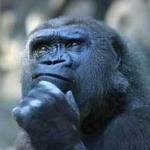地球で一番最初の人類ってどうやって発生したの?