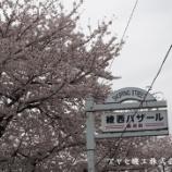 『【綾瀬市シリーズ】綾西・国分寺台の桜』の画像