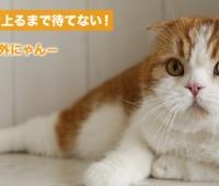 【欅坂46】トム『駆け上るまで待てない!-番外編-』に登場!雑誌『 HUSTLE PRESS 01』にも登場しゆっかーと対談!