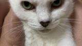 うちの猫ちゃんが18歳になった(※画像あり)
