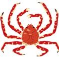 【ガチ】世界最大の蟹、日本近海に生息していた。