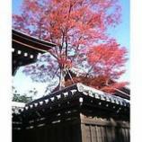 『古都の秋』の画像
