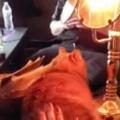 ネコのモフモフな「背中」を触ってみる。ぽふぽふぽふ♪ → 卓上ランプはこうなります…