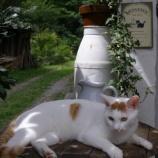 『幻の猫現る』の画像