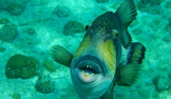 【閲覧注意】海に潜む恐怖……! 世界最強の海洋生物ランキングBEST10!!!!!