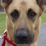 『愛する犬がDNA鑑定で無実を証明』の画像