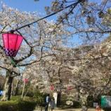 『浜松城公園の桜が開花!お花見をするなら3/24(土),25(日)が見頃になりそう - 2018年春』の画像